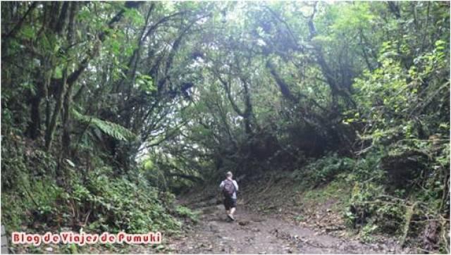 """El paseo por la """"Reserva Biológica Bosque Nuboso Monteverde"""" es agradable. Hay varios senderos algunos de los cuales son de dificultad baja, perfectamente adecuados para ir con niños. A través de él conoceremos este particular ecosistema y llegaremos en menos de una hora a el Mirador de la Ventana."""