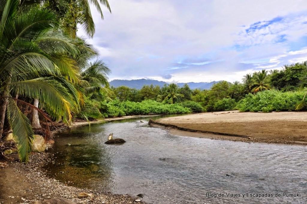 rio y manglar junto a las playas de ballena y Piñuelas