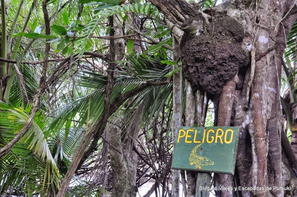 Cocodrilos y termitas en Marino Ballena