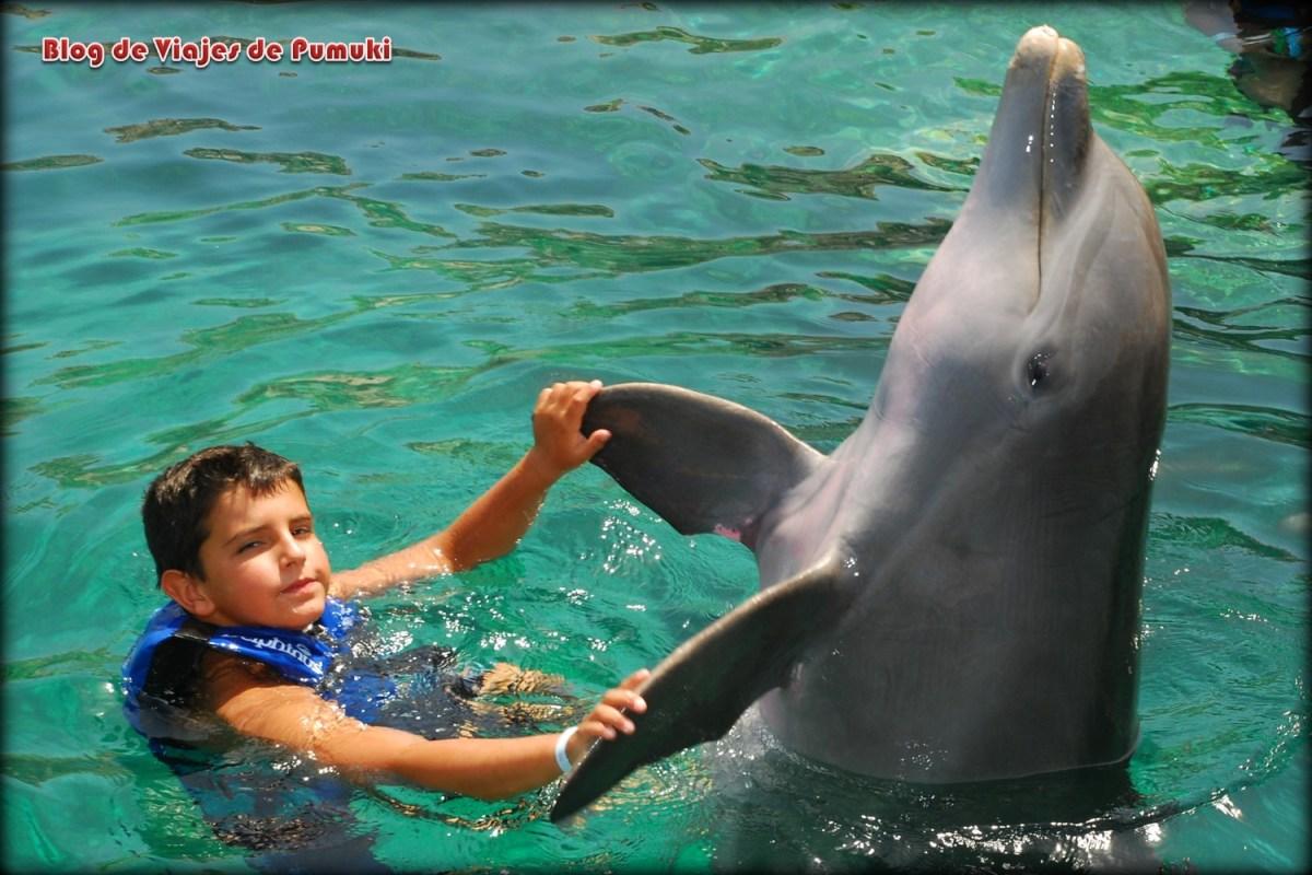 Baño con delfines en la Riviera Maya