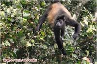 En Costa Rica la selva y la fauna estan fácilmente accesibles para visitar aunque no seas un aventurero o incluso vayas con niños. Blog de viajes a Costa rica