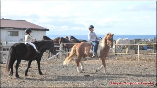 Montando el caballo islandés, Islandia