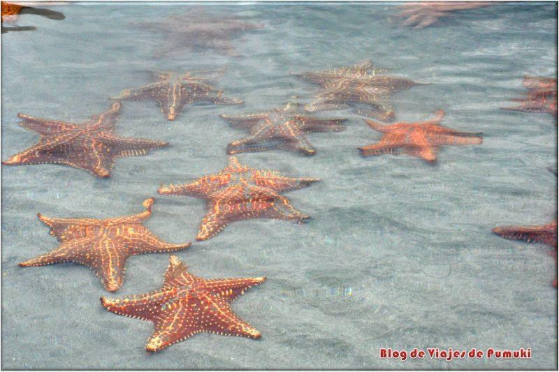 Playa Estrella en Bocas del Toro, Panama