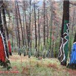 Bosque Pintado de Oma creado por Agustín Ibarrola