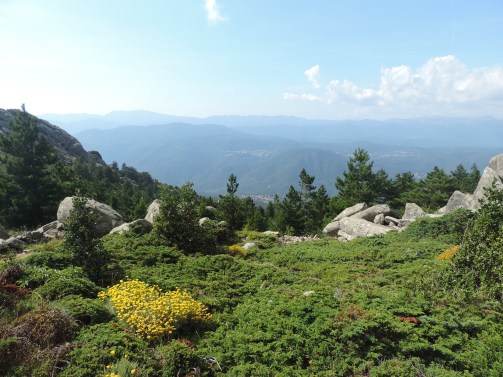 Alta Rocca Lévie et Immortelle