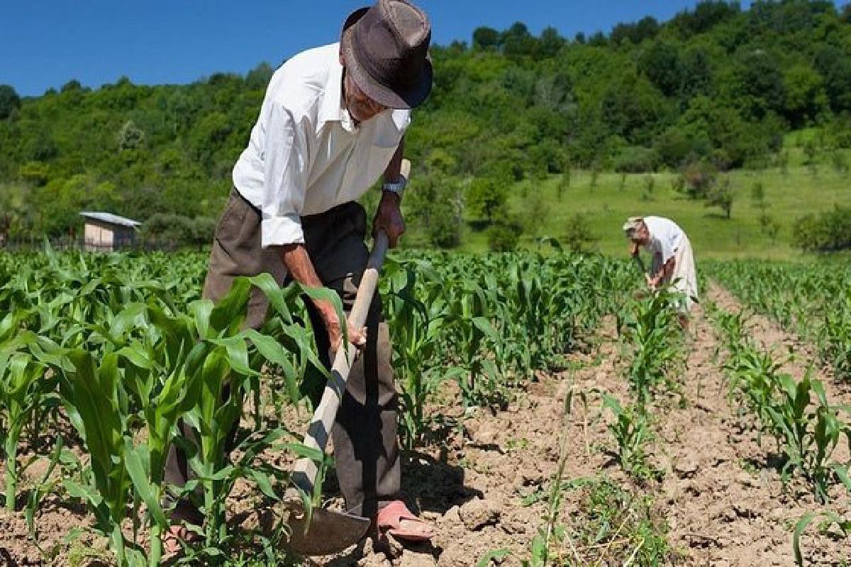 Trabalhadores Rurais, plantando na roça