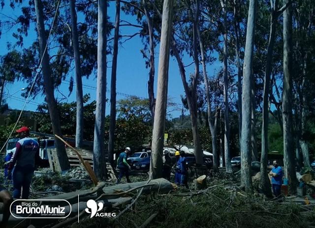 Tragédia — homem cai de árvore e morre no Agreste de Pernambuco