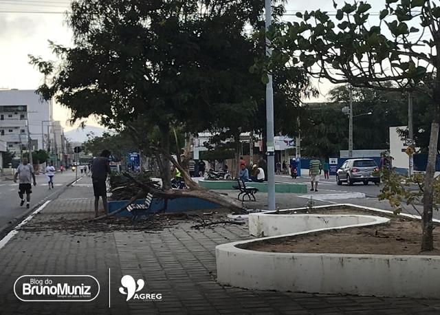 Andarilho danifica árvores em avenida de Santa Cruz do Capibaribe