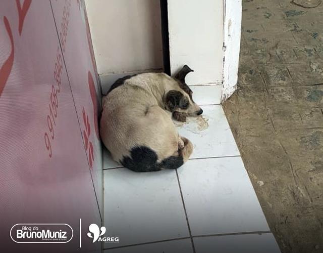 Cadela alvo de abuso sexual é resgatada em Santa Cruz do Capibaribe