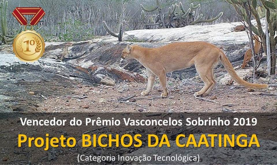 Projeto Bichos da Caatinga conquistou o maior prêmio ambiental de Pernambuco na categoria inovação tecnológica