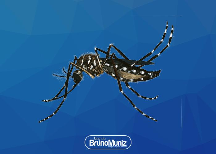 Combate ao mosquito Aedes aegypti em Santa Cruz está interrompido por falta de larvicida