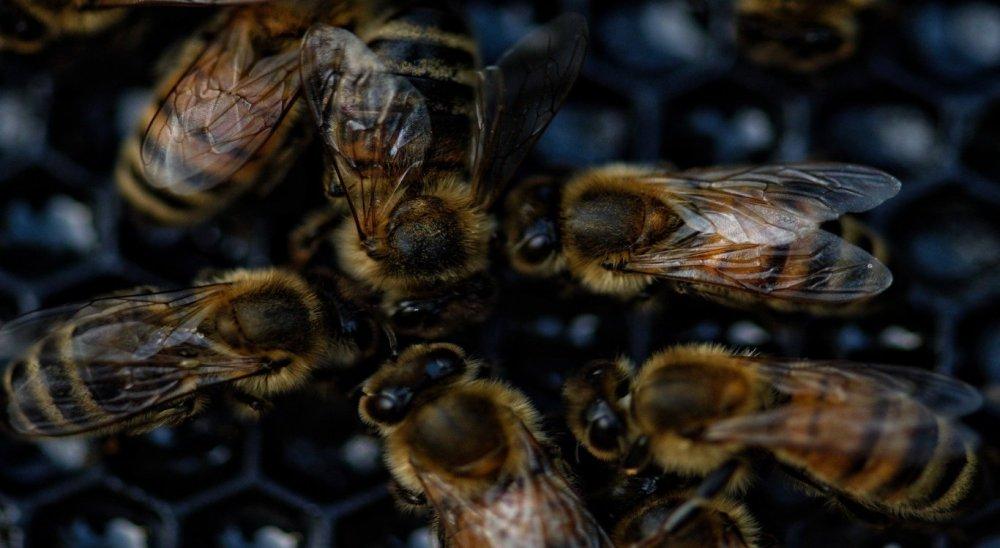 Idoso morre após ser picado por abelhas em Bonito, no Agreste
