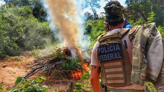 Em 5 meses, PF descobre mais de 300 toneladas de maconha em Pernambuco