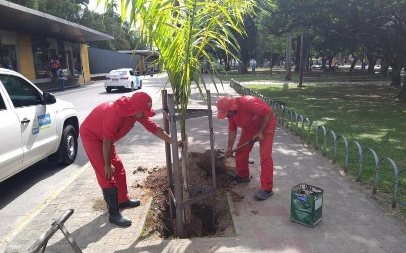 Dia da Árvore, 21 de setembro: Arborização pelas mãos dos reeducandos