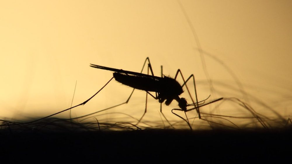 Um oportunista em ação: Casos de dengue e viroses aumentam em Santa Cruz do Capibaribe após chuvas