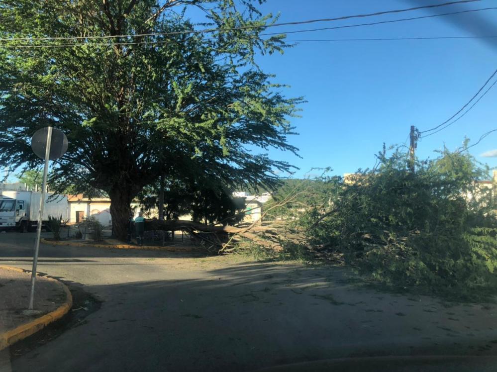 Árvore tomba em movimentada avenida de Santa Cruz do Capibaribe