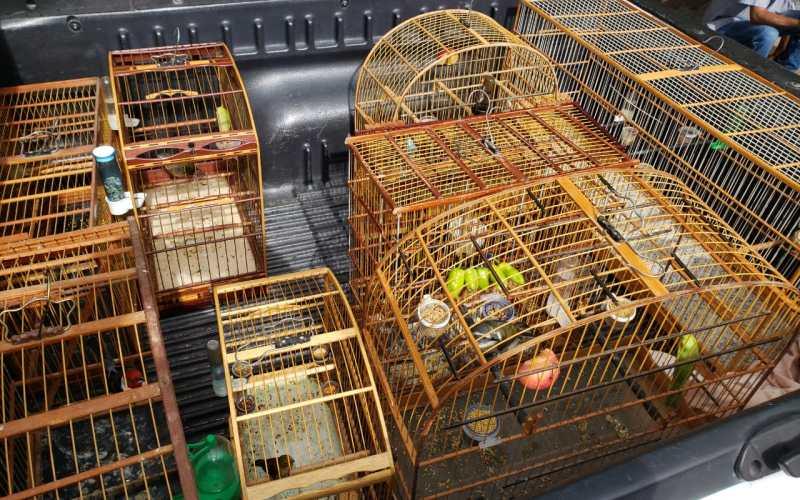 Operação de combate a crimes ambientais resgata 60 animais silvestres na feira da Boa Vista, em Caruaru
