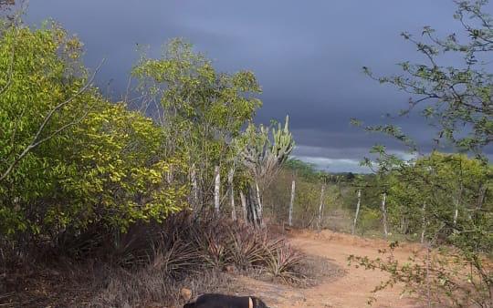 Dois corpos são encontrados na zona rural de Taquaritinga do Norte