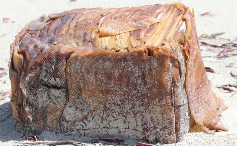 Caixas misteriosas apareceram na mesma praia onde encalhou o navio Baraka, em Cedral-MA