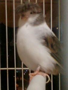 Pássaro-Beatle-Paul I
