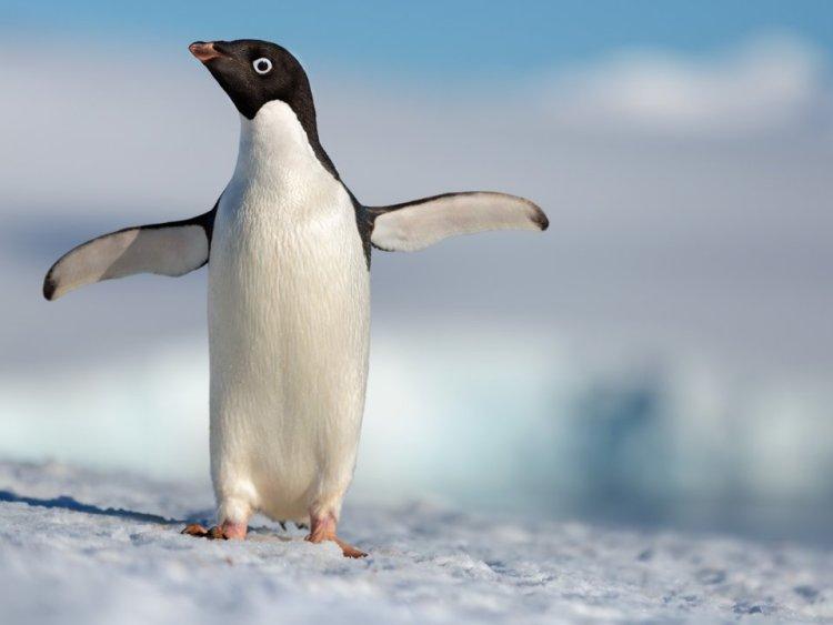 pinguins-disney-blogdoferoli