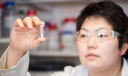 Pó de sílica pode conservar vacinas sem refrigeração