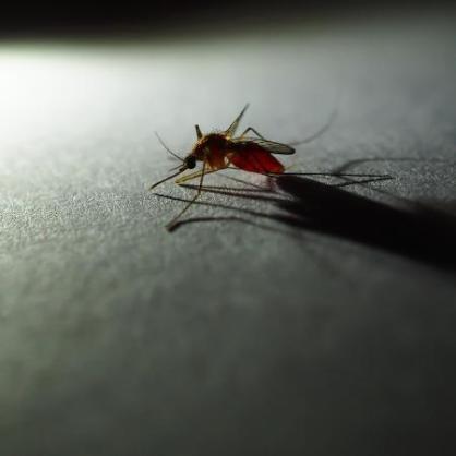 anopheles-mosquito-que-transmite-malaria-1556285185301_v2_450x450