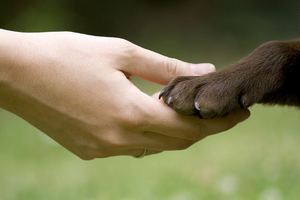 human_dog_handshake
