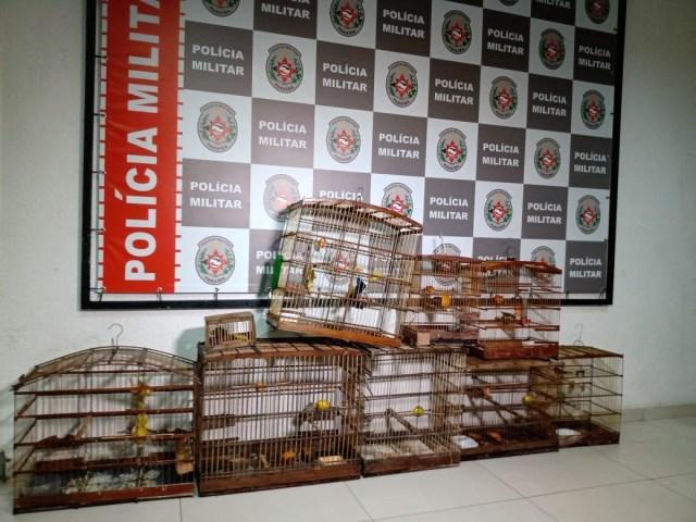 Na Capital, criador de aves é preso em flagrante pela Polícia Ambiente,