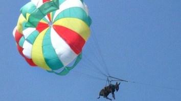 balão asno