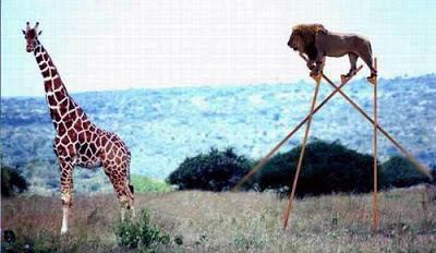 Seleção natural não pode ser a causa de um processo evolutivo por duas razões: incapacidade de criar e limitação em selecionar