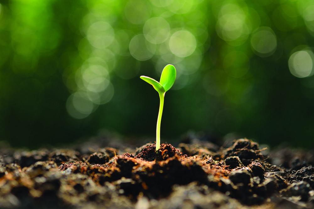 A matemática das plantas corrobora a teoria da evolução?