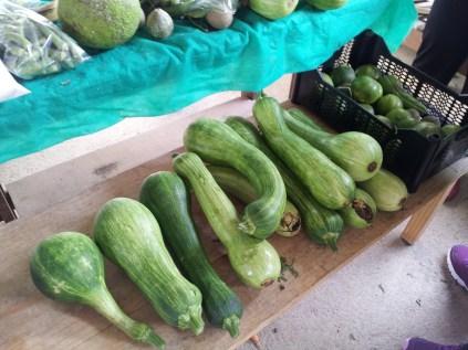 feira agro ecologica (7)