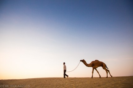 Camel driver walking his camel at dusk along the sand in the Thar desert, Rajasthan.