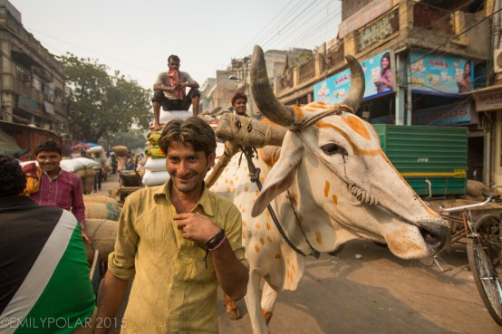 Creepy drunk Indian guy posing with a white Ox in the streets at the spice market in Old Delhi.