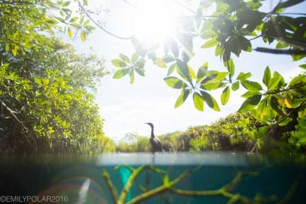 casa_cenote_160722-123