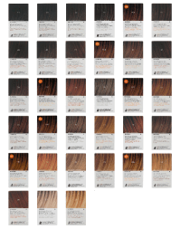 Argan Oil Hair Color Chart | www.pixshark.com - Images ...