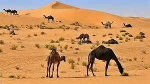 saudi-desert
