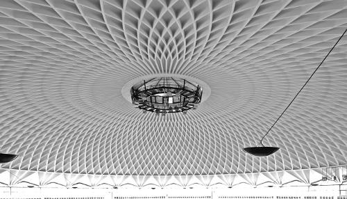 fundacion-arquia-blog-aquitectura-Pallazzetto-dello-sport-Nervi-biomimicry-miren-leon