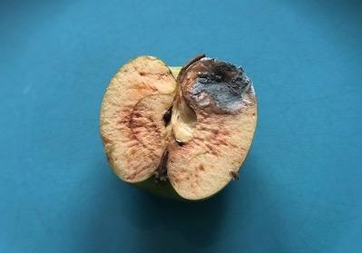 Ett mögligt äpple.