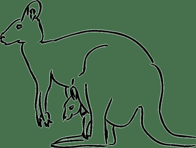 kangaroo-47642_640