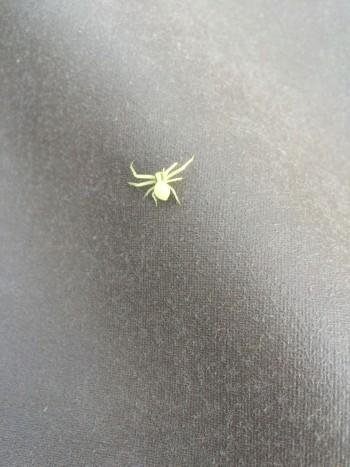 spindel självlysande