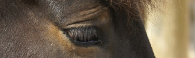 hesteliv