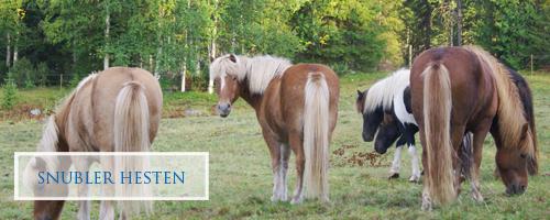 Snubler hesten?