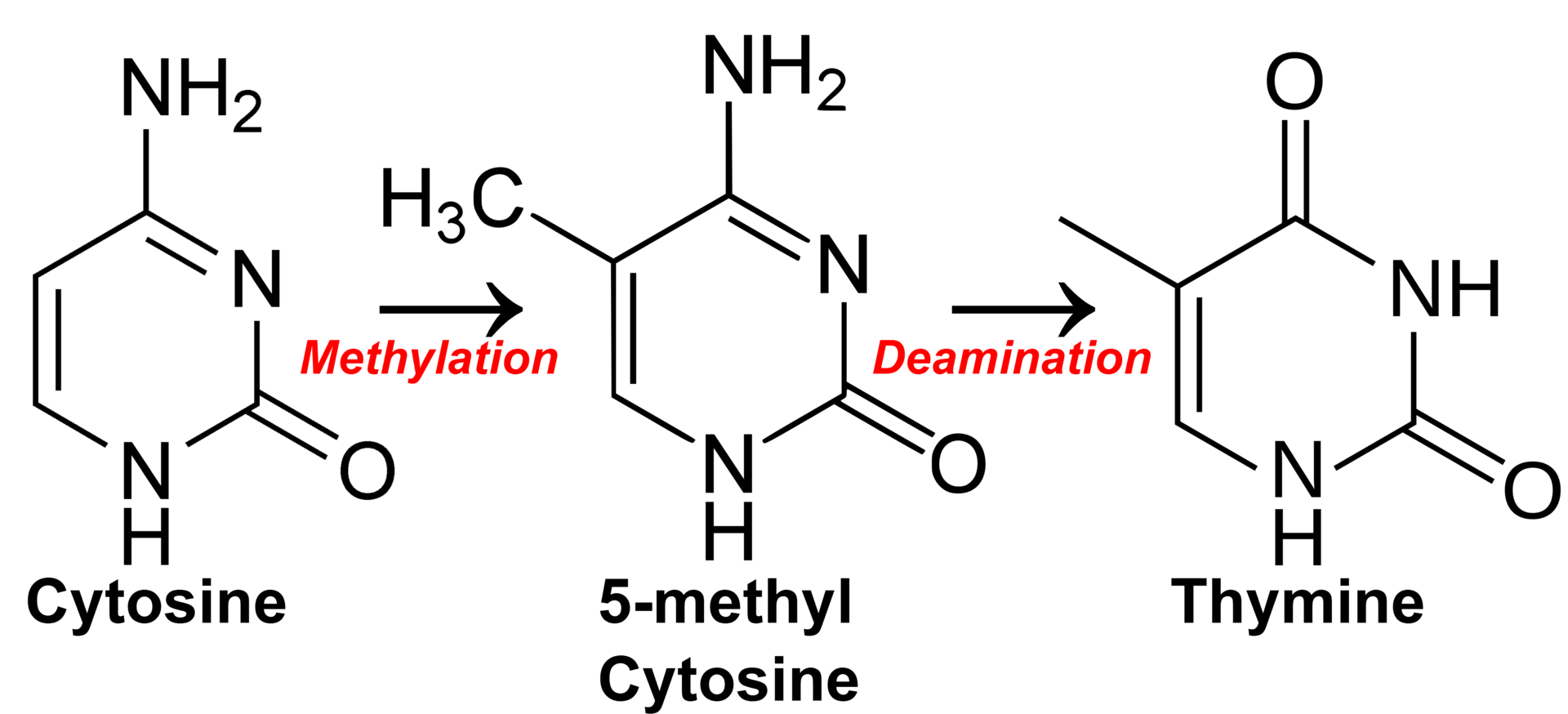 hight resolution of cytosine methylation