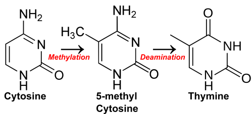small resolution of cytosine methylation