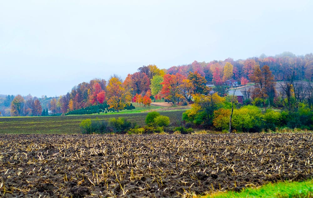 Champlain Orchard, from route 74 west