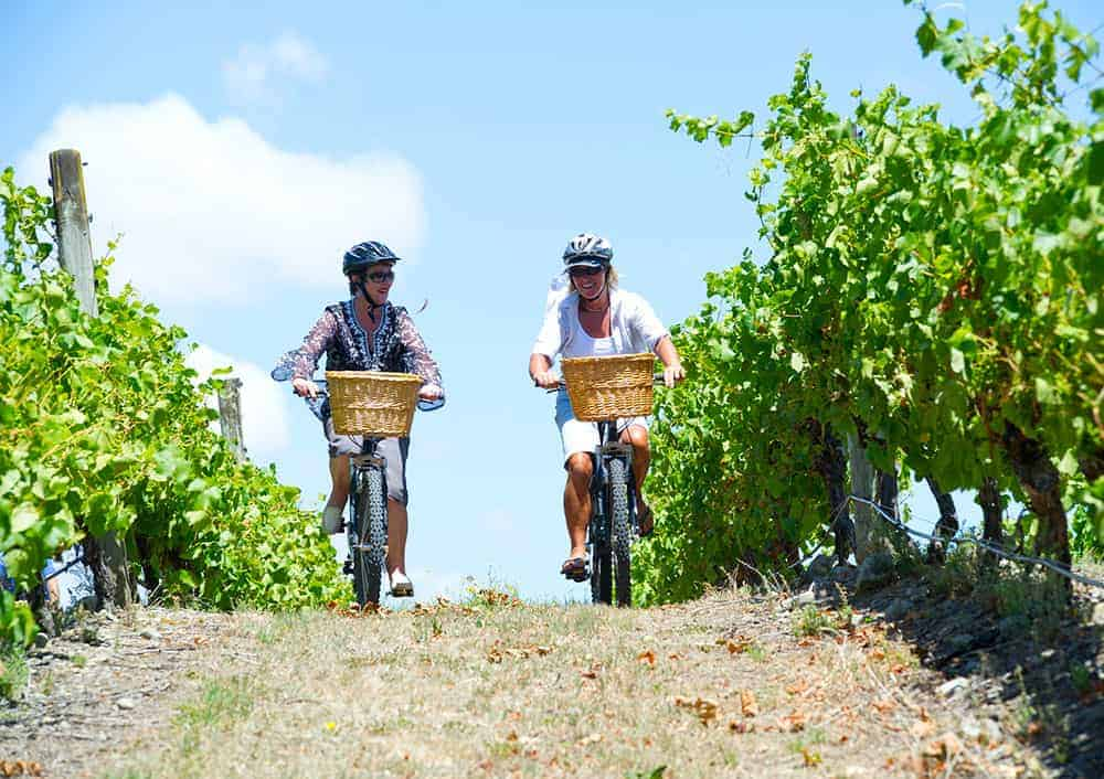 Cycling through a Martinborough vineyard