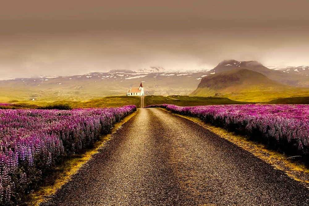 Iceland road edged in flowers