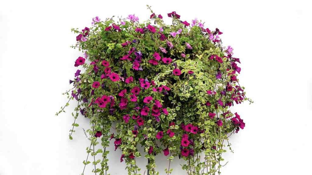 Beautiful hanging style IkeBana photos - art of japenese flower arrangements